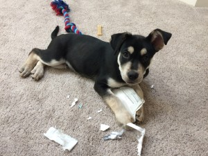 Chuy loves bonus content but spam and junk mail, not so much.