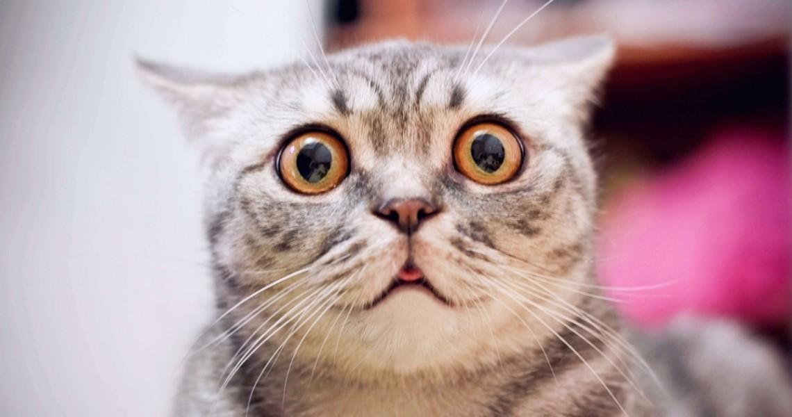 scaredy_catFB
